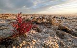 Morze Aralskie_3.jpg